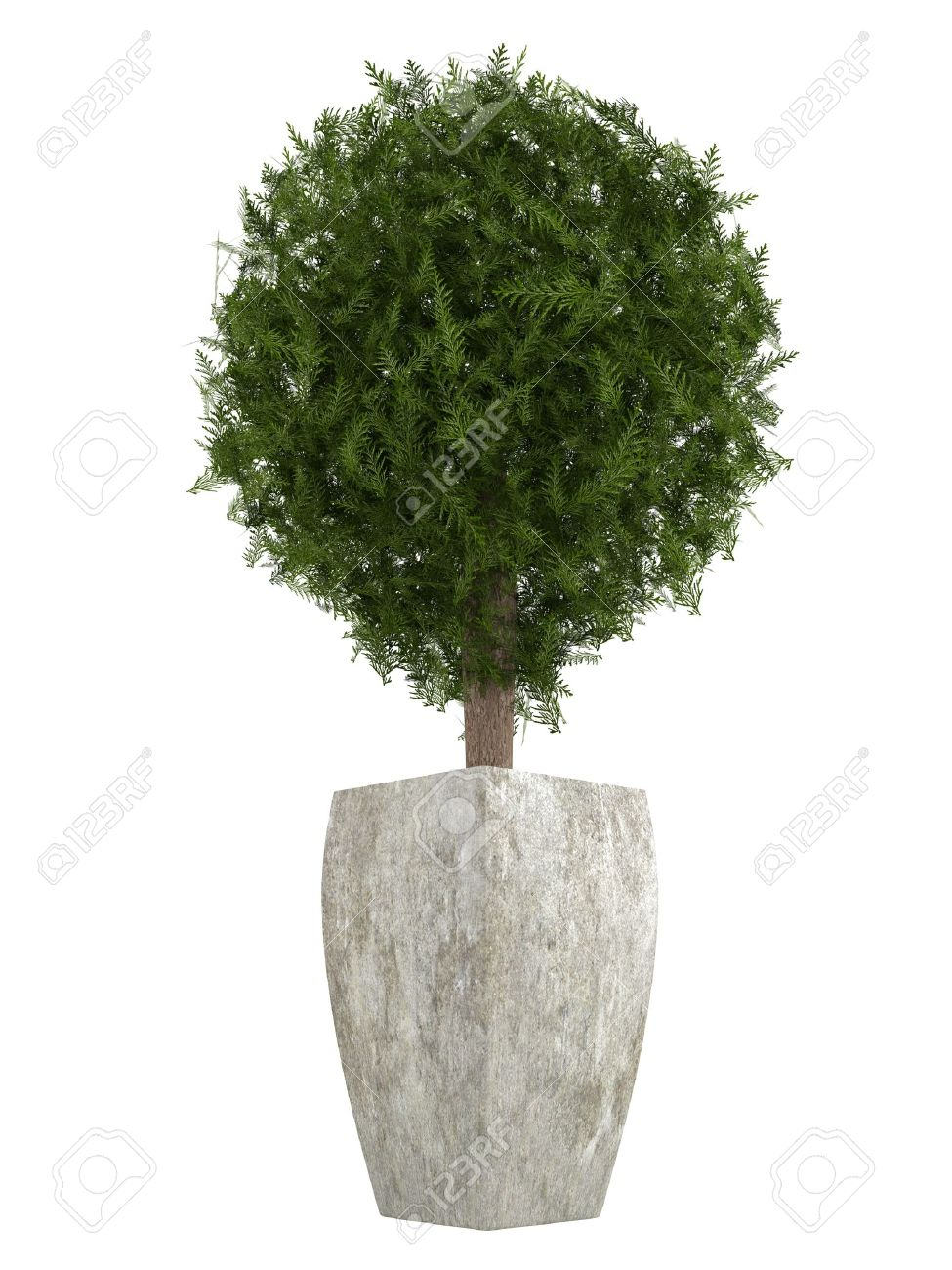 Decorative Indoor Trees Evergreen Cypress Topiary Tree In A Container For Use Indoors