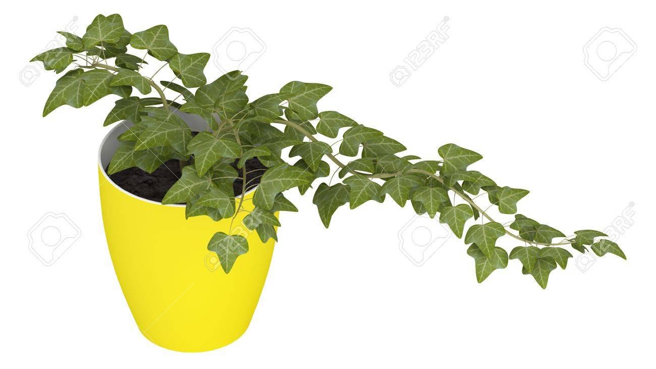 Lierre Poussant Dans Un Pot Jaune Joyeux Comme Plante D\'intérieur ...