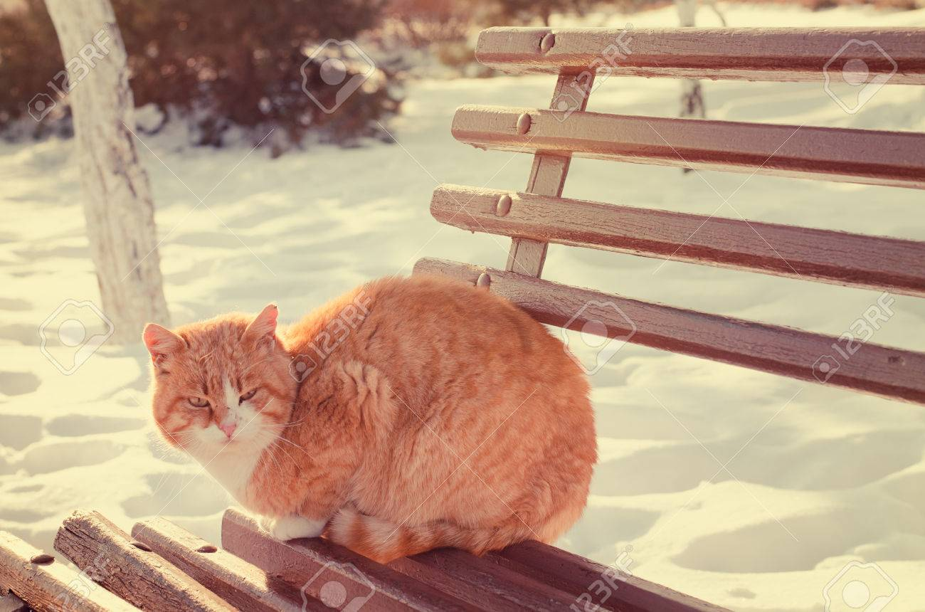 Tremendous Ginger Cat Outdoors In Winter Sitting On A Wooden Garden Bench Inzonedesignstudio Interior Chair Design Inzonedesignstudiocom