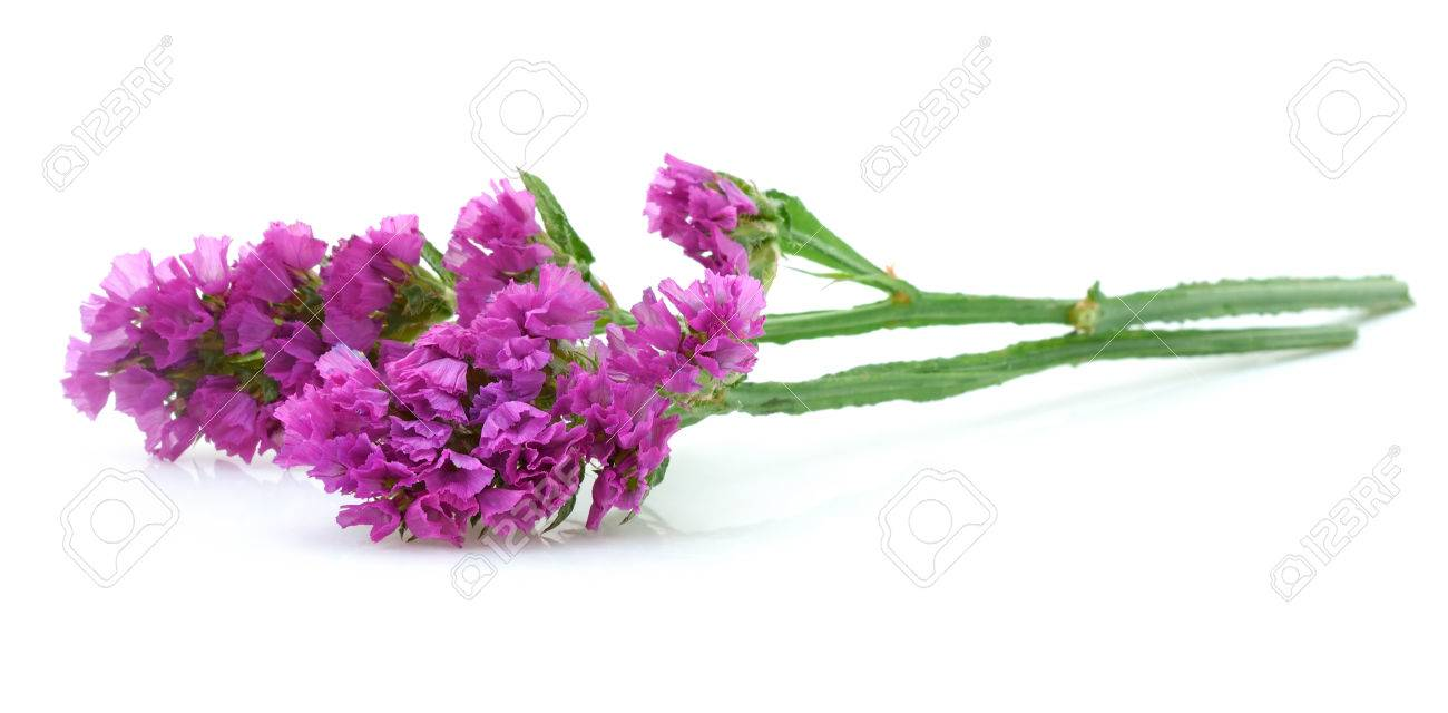 Pink statice flower isolated on white stock photo picture and pink statice flower isolated on white stock photo 27322349 mightylinksfo Images