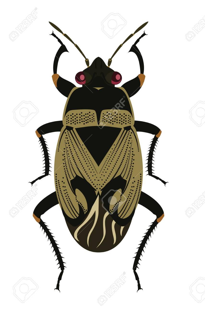Ground Bug Stock Vector - 17354433