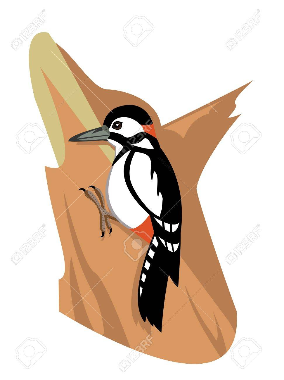Woodpecker Stock Vector - 18663645