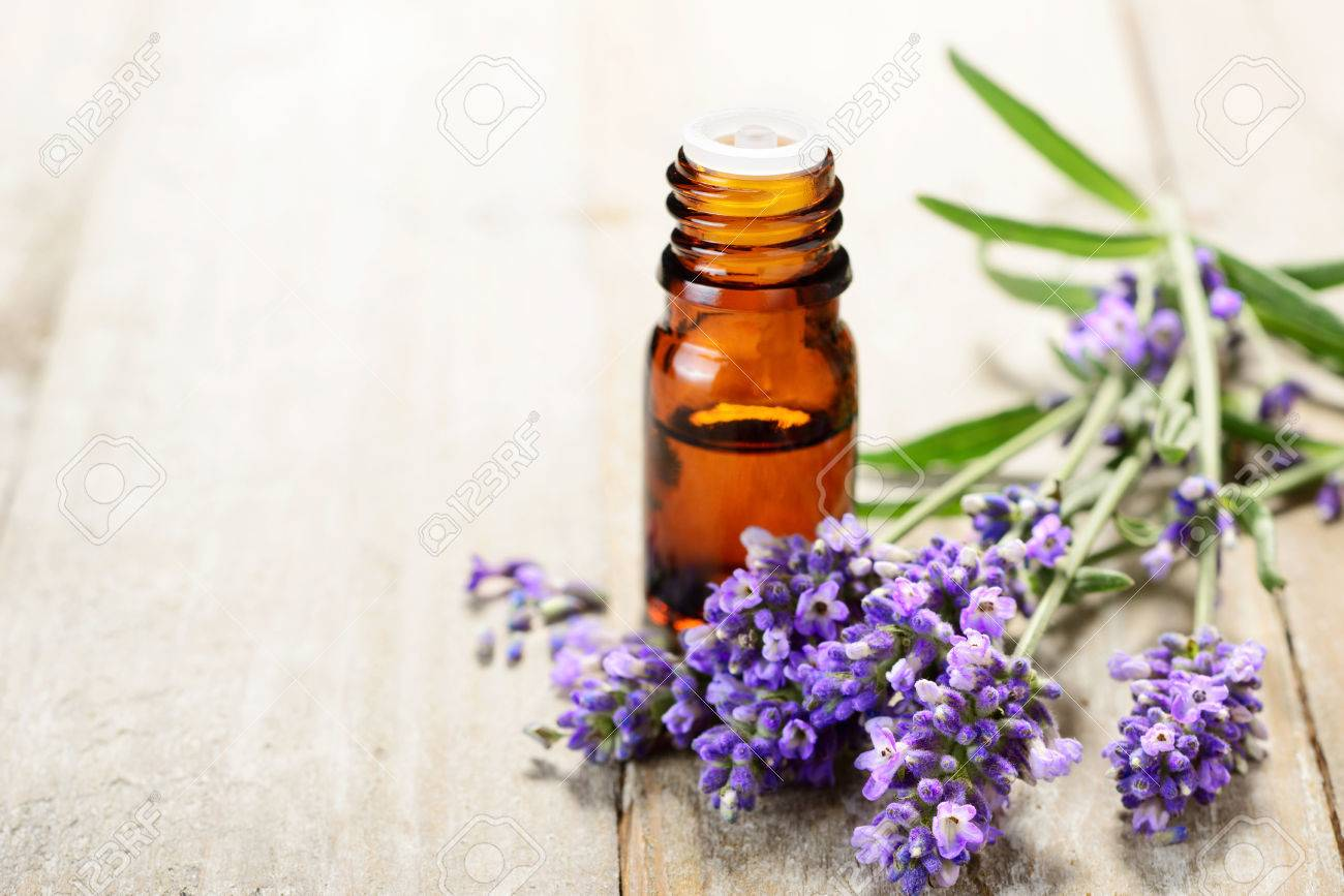 Lavender essential oil in the amber bottle, with fresh lavender flower heads. - 81303024