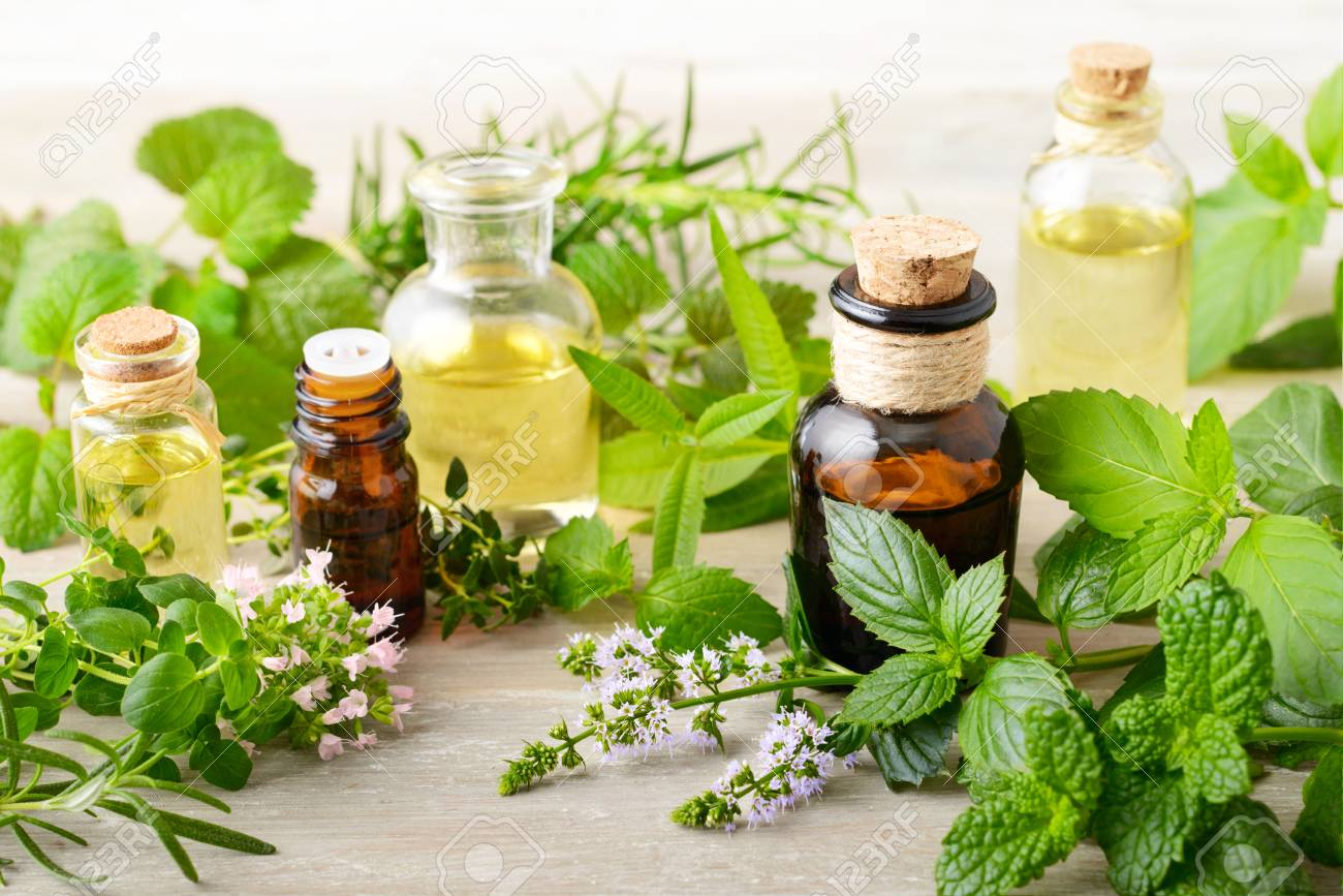 fresh herbs and massage oils on the wooden board - 95051887