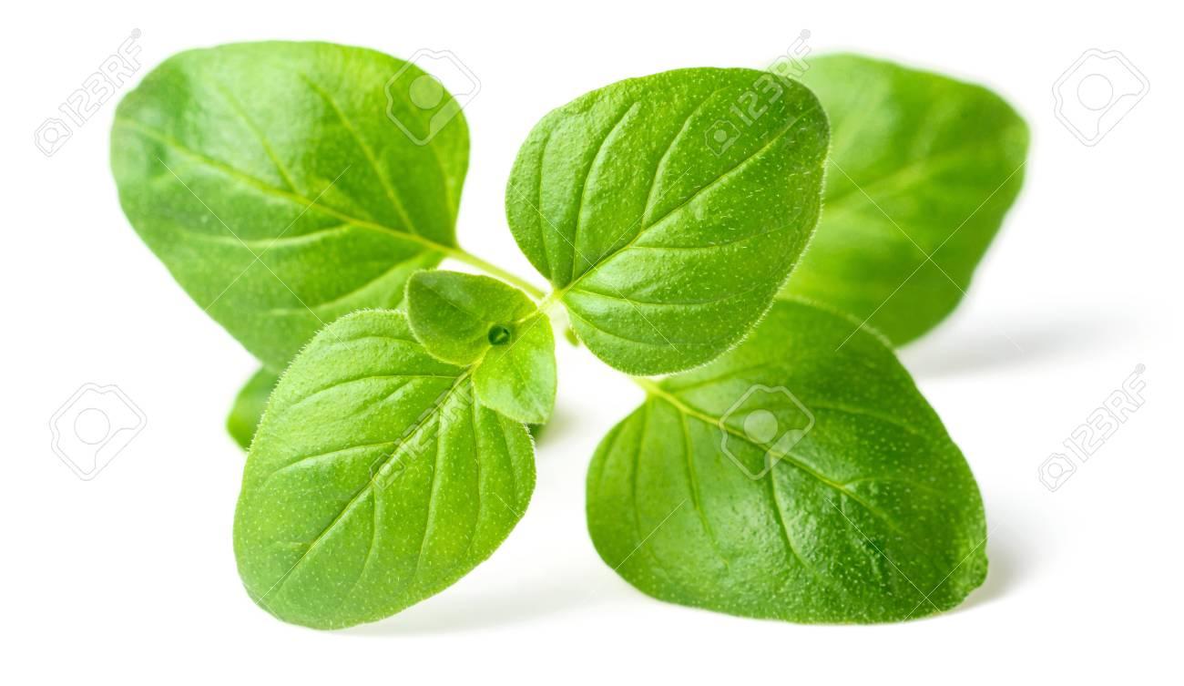 fresh oregano leaves isolated on white - 95358651
