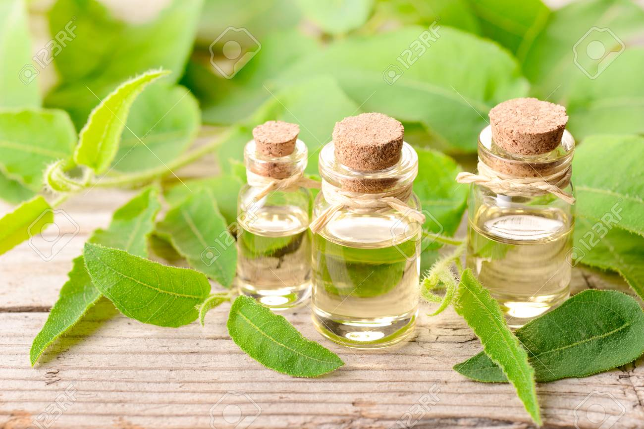 eucalyptus essential oil and fresh eucalyptus on the wooden board - 101179167
