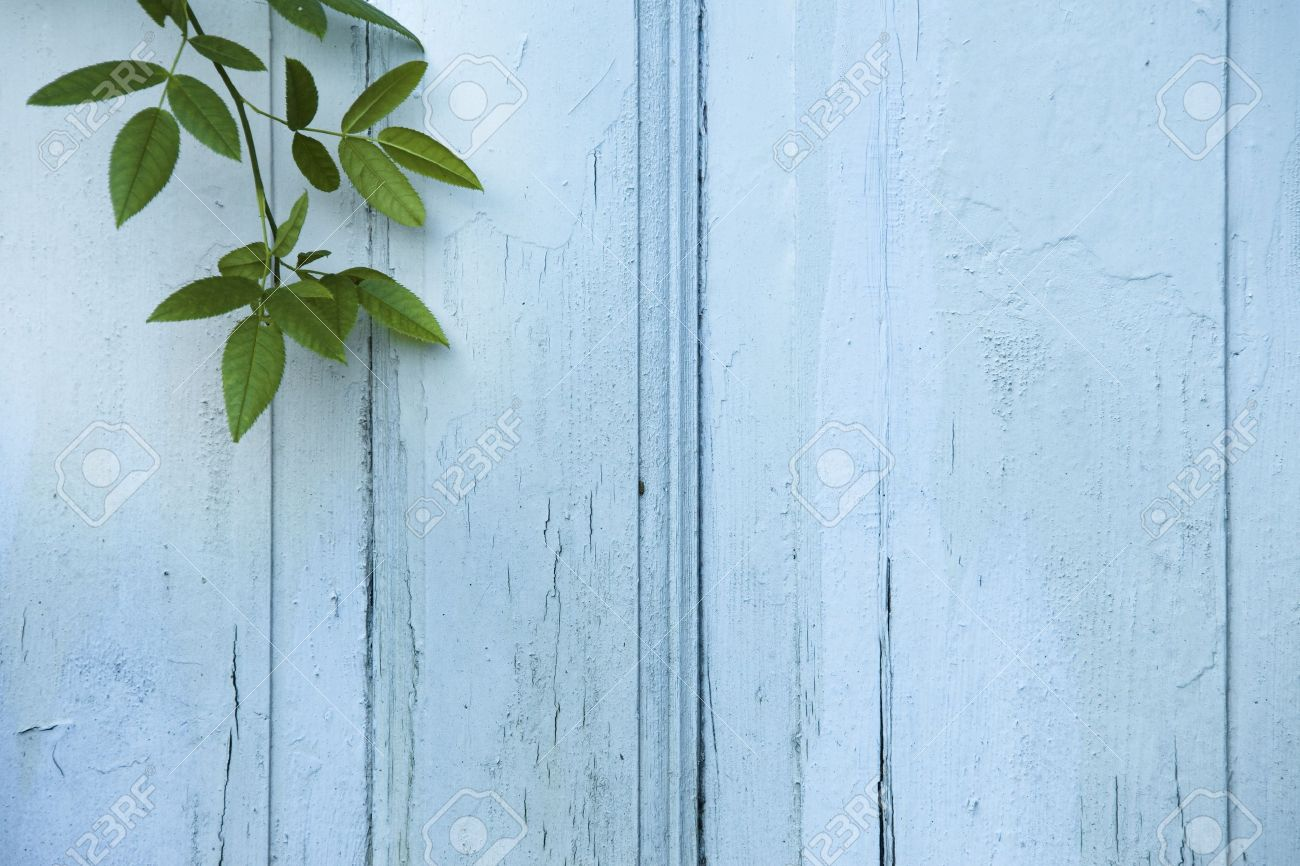 Green Leaves on blue wooden background Stock Photo - 9900026