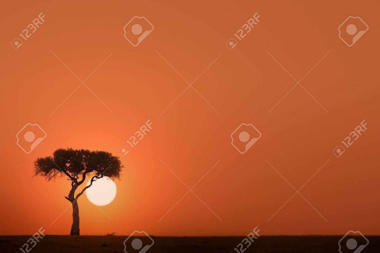 African acacia tree at sunset Stock Photo - 11694635