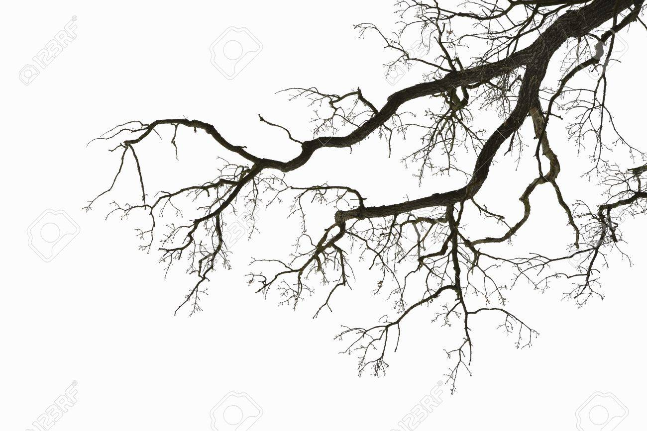 Natural color silhouette of a leafless tree against an overcast sky - 17925026