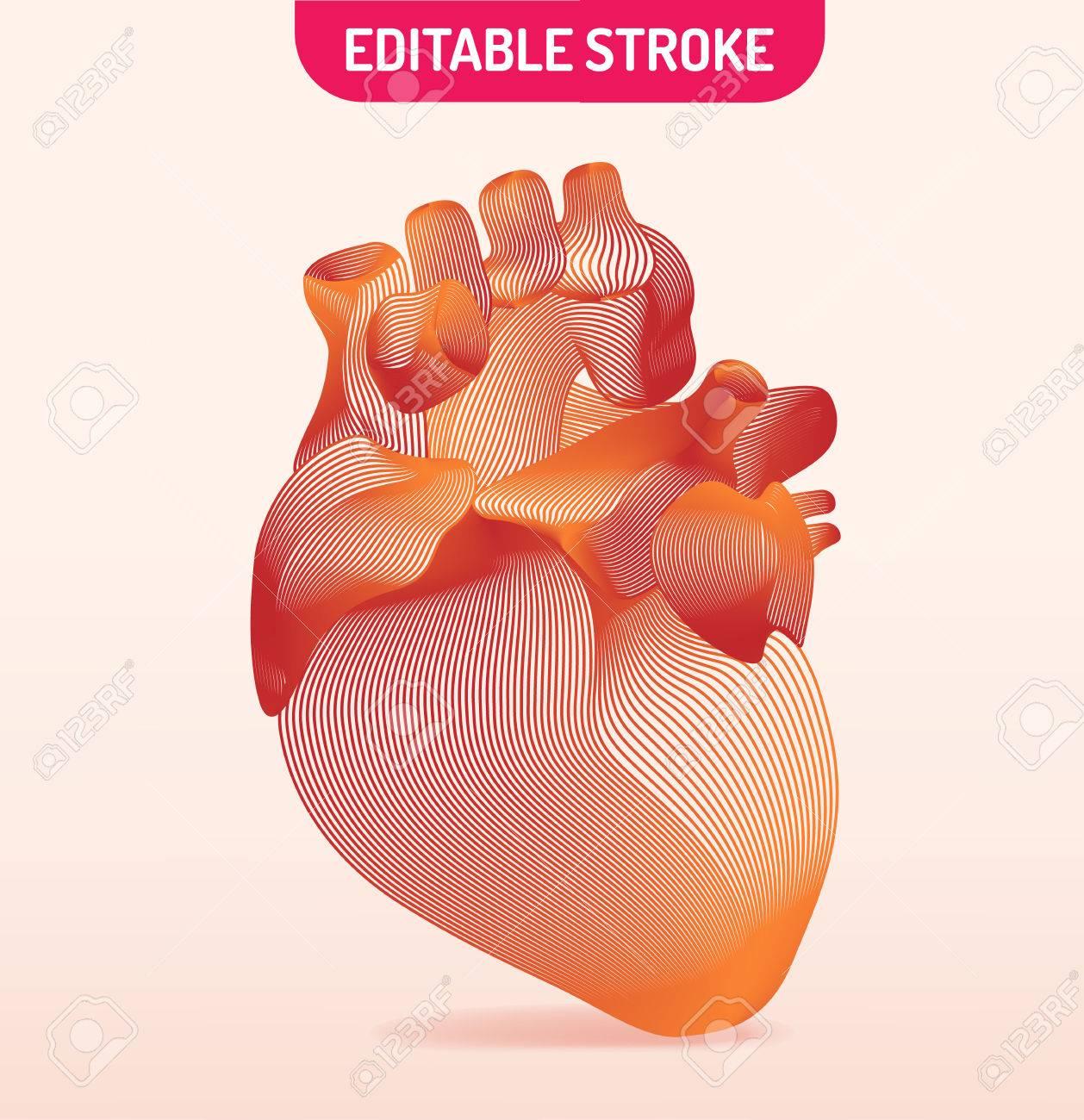 Line Art Of Human Anatomical Heart Vector Illustration Royalty