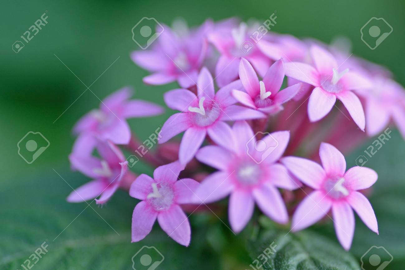 A Single Pink Flower On Green Blackground In Nature Stock Photo