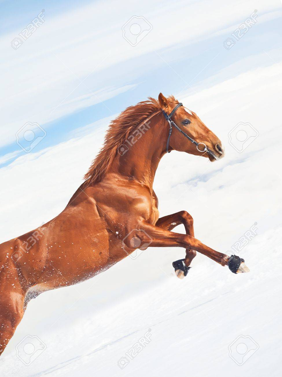 amazing sorrel horse in jump at blue  sky background sunny day Stock Photo - 12774256