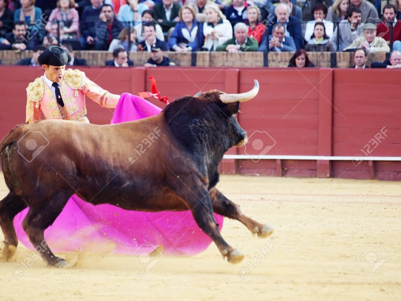 SEVILLA -MAY 20: Novilladas in Plaza de Toros de Sevilla. Novillero:Alvaro Sanlucar. May 20, 2012 in Sevilla (Spain)  Stock Photo - 13789423