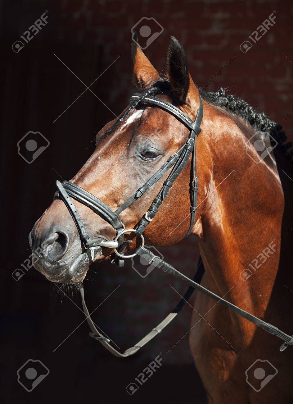Beautiful Horse Stables Horse on Stable Background