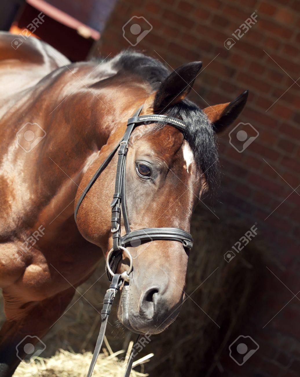 Beautiful Horse Stables Horse at Stable Background