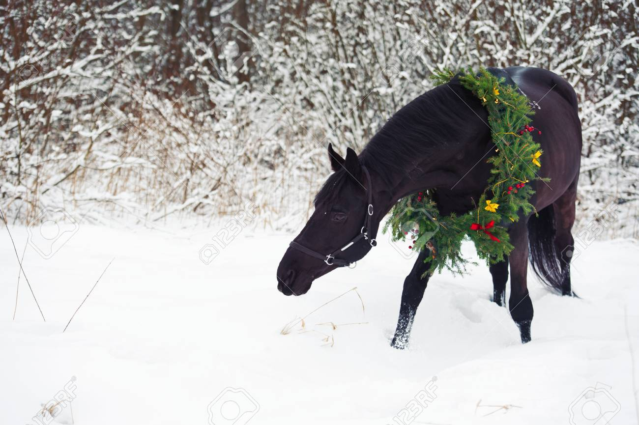 Black Horse With Christmas Wreath Winter Stock Photo Picture And Royalty Free Image Image 53800654