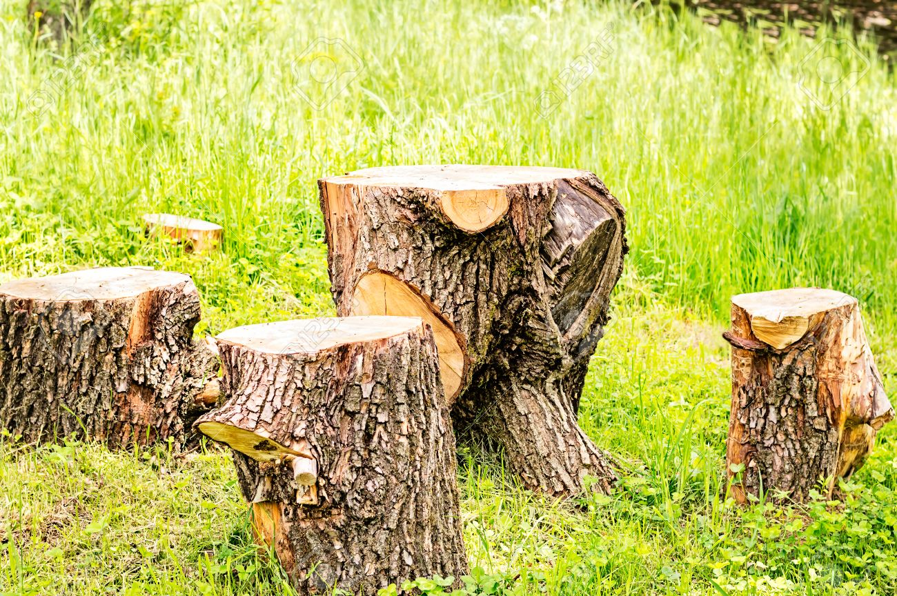 Picnic Table And Chairs Made Of Cut Tree Trunks. Stock Photo   42315311