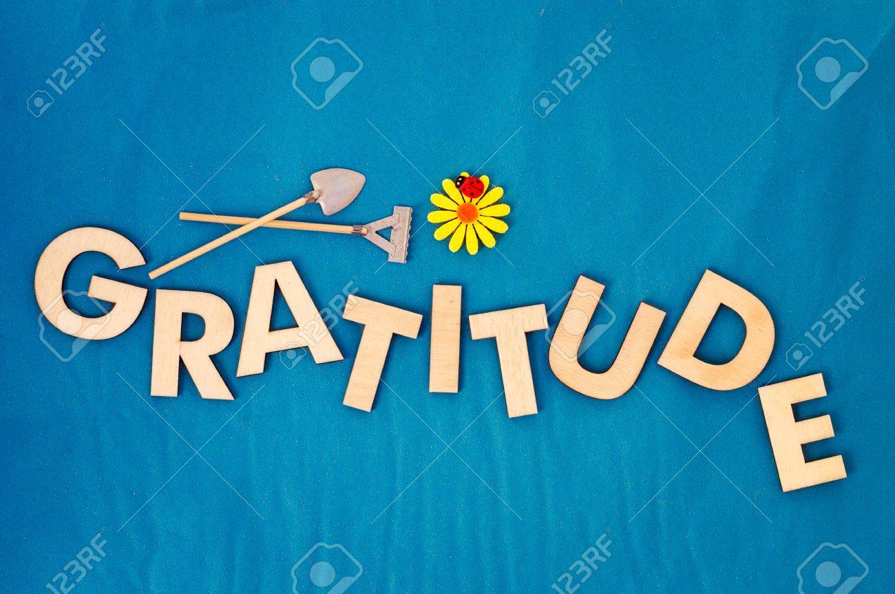 stock photo top view of capital letters made of wood spelling the word gratitude on light blue background with yellow daisy ladybug miniature shovel and