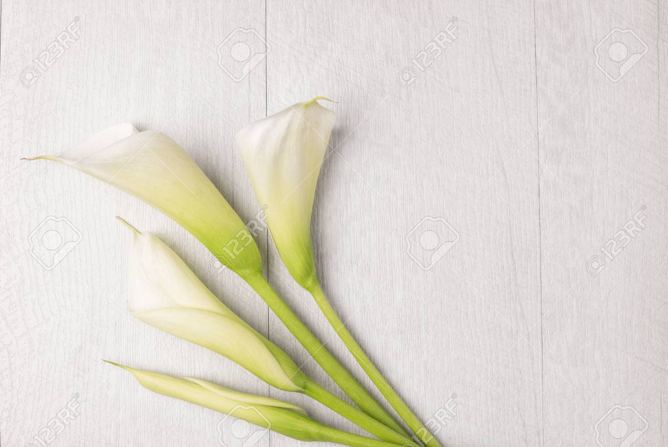 Elegant Spring Flower Calla Lily On Rustic Wooden Table For