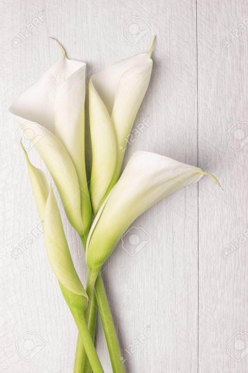 Elegant spring flower calla lily on rustic wooden table for elegant spring flower calla lily on rustic wooden table for wedding background image izmirmasajfo
