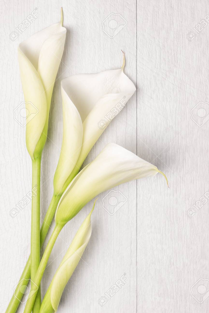 Elegant spring flower, calla lily on rustic wooden table. For wedding background image. Top view with copy space - 56275733