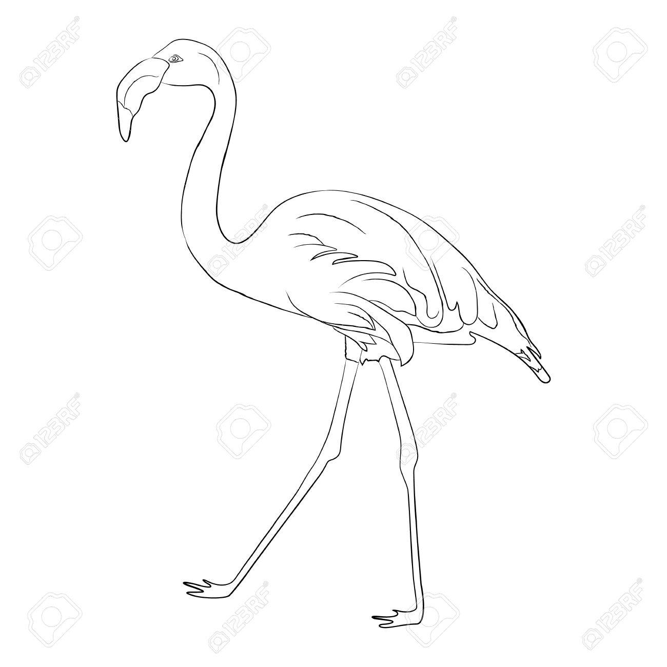 Hand Drawn Flamingo Black Outline Sketch Exotic Bird Stock Photo