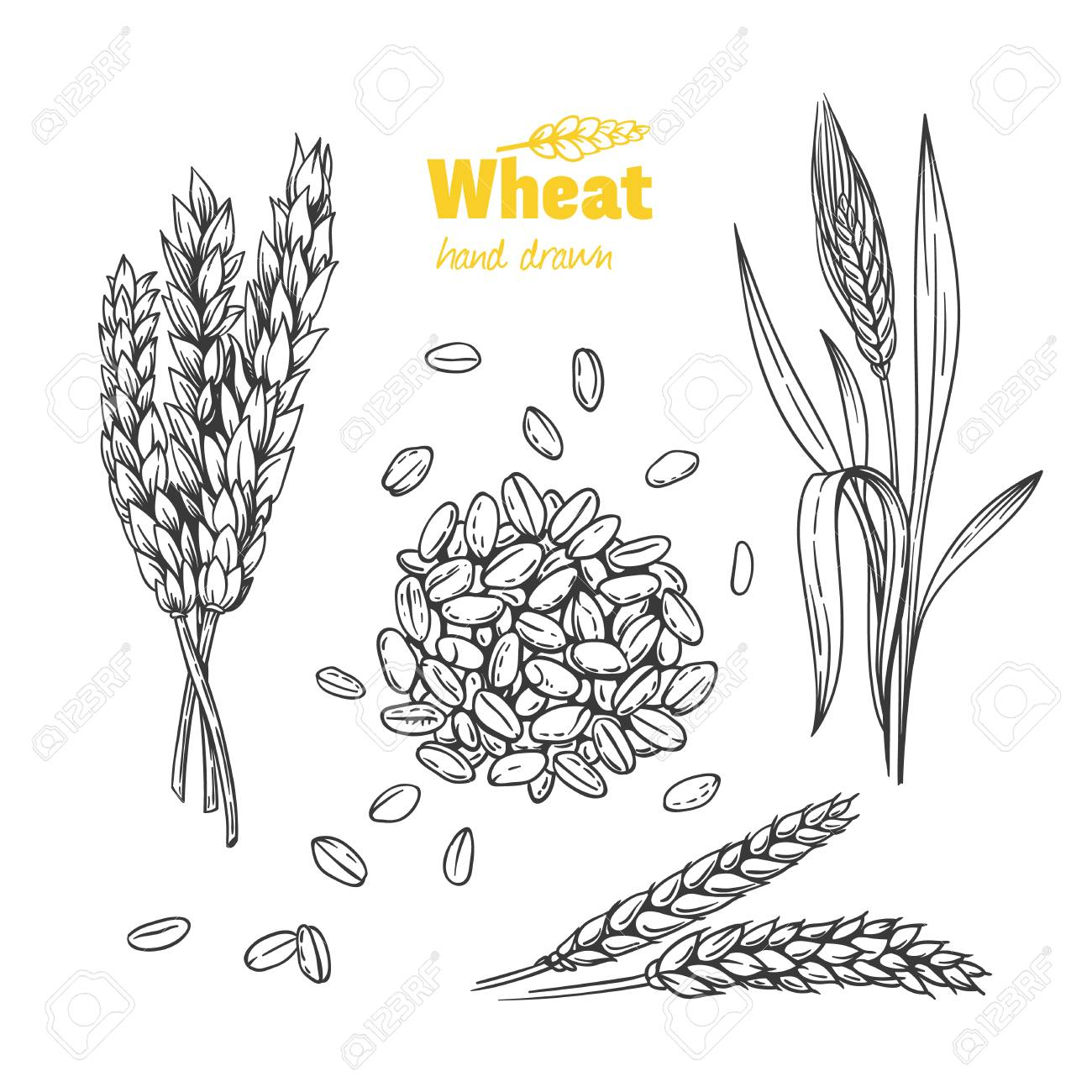 Sheaf of wheat Royalty Free Vector Image - VectorStock