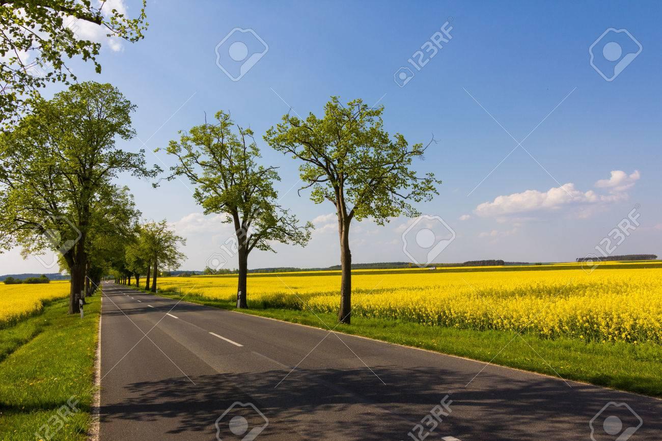 Fiori Gialli Germania.Immagini Stock Una Strada Di Campagna In Germania E Incorniciato