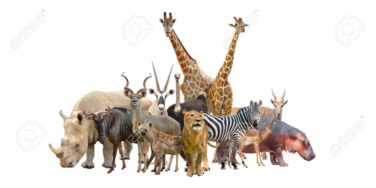 Group Of Africa Animals Isolated On White Background Stock Photo ...