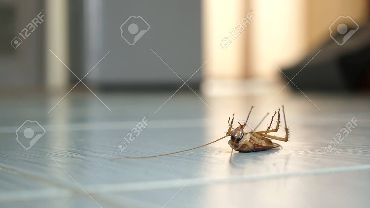 Dead cockroach on the floor after being hit by pesticides Stock Photo - 73479457