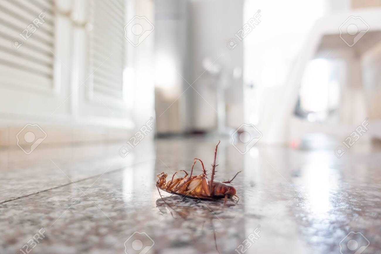 Dead cockroach on floor, pest control concept - 120217878