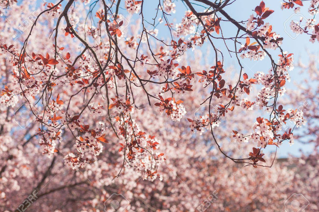 A few branches of blooming tree with pink flowers and orange stock a few branches of blooming tree with pink flowers and orange leaves with light blue mightylinksfo