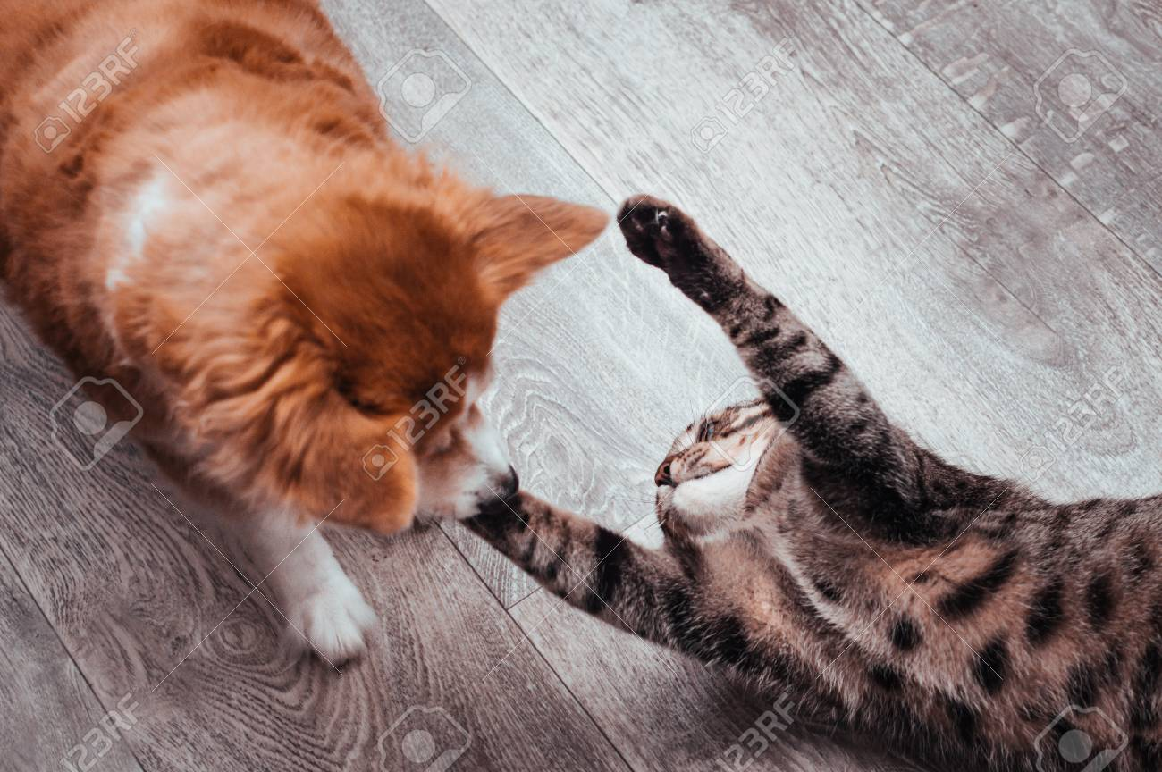 Cat And Dog Play Together Close Up Stock Photo Picture And Royalty