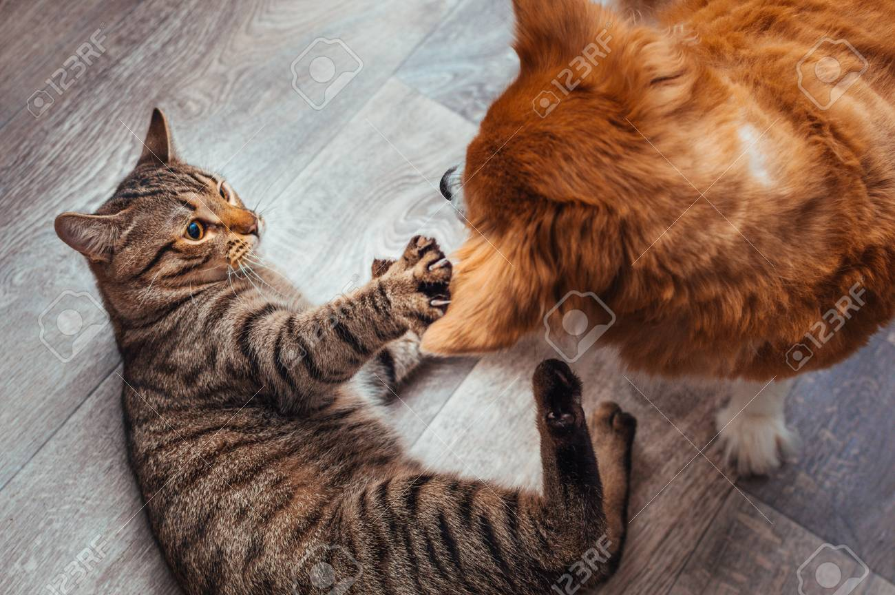 Cat And Dog Play Together Friendship Between Animals Close Up