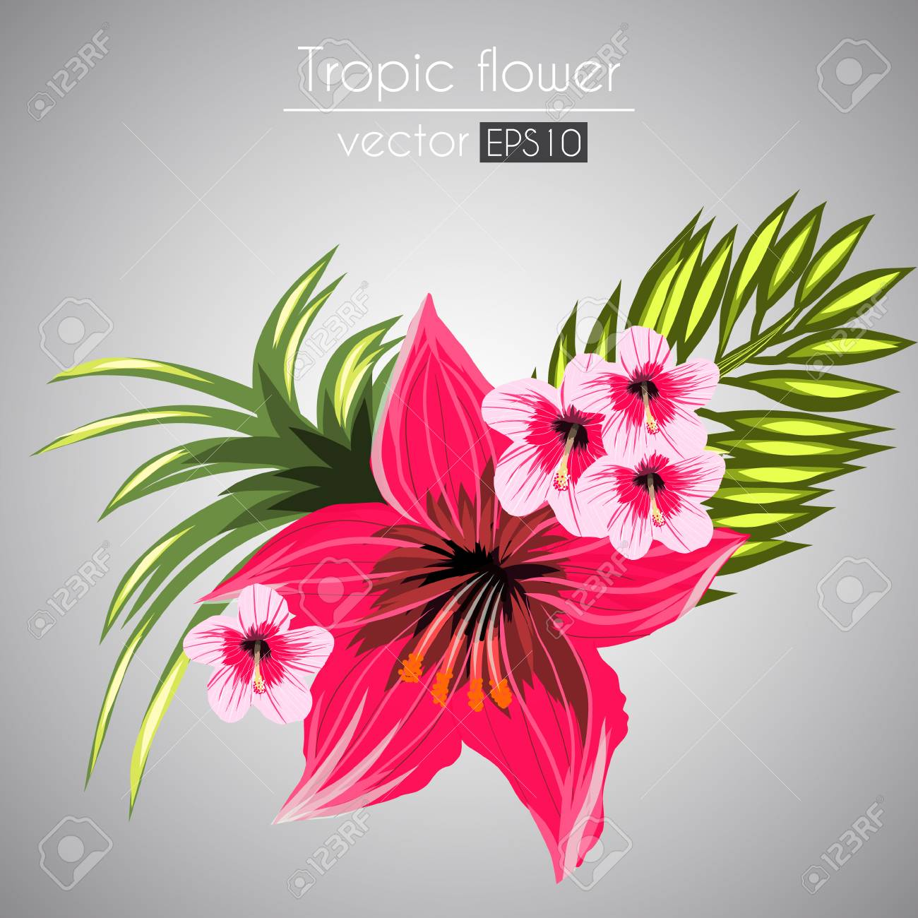 Beautiful tropical flowers bouquet isolated on a gray background beautiful tropical flowers bouquet isolated on a gray background stock vector 95666481 izmirmasajfo