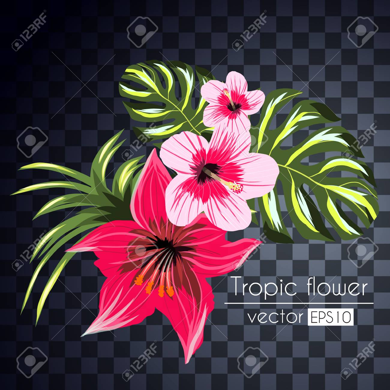 Beautiful Tropical Flowers Bouquet Isolated On A Transparent ...