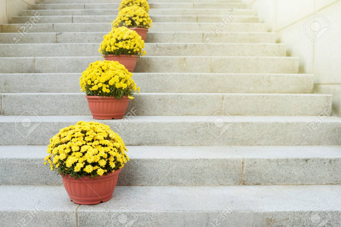 Yellow Flowers In Clay Pots Stand On A Stone Ladder Decor Of