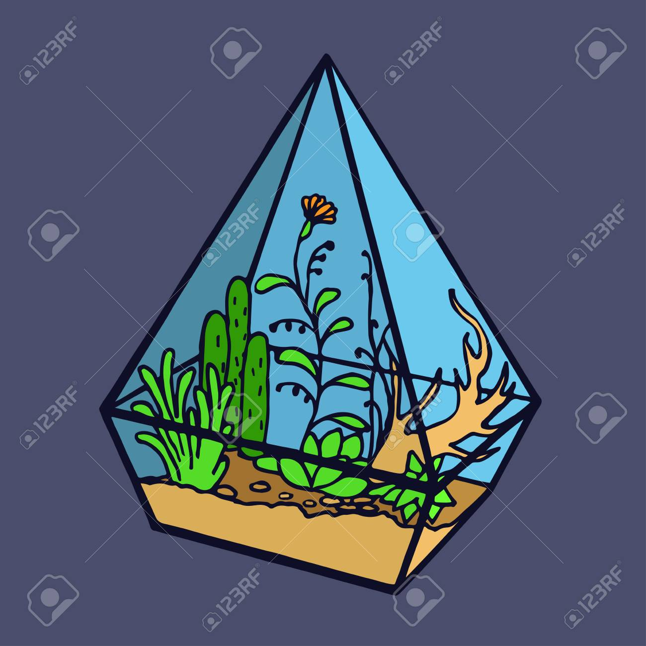 Vector Glass Polygonal Terrarium With Succulent Plants Grass Stock Photo Picture And Royalty Free Image Image 48289663