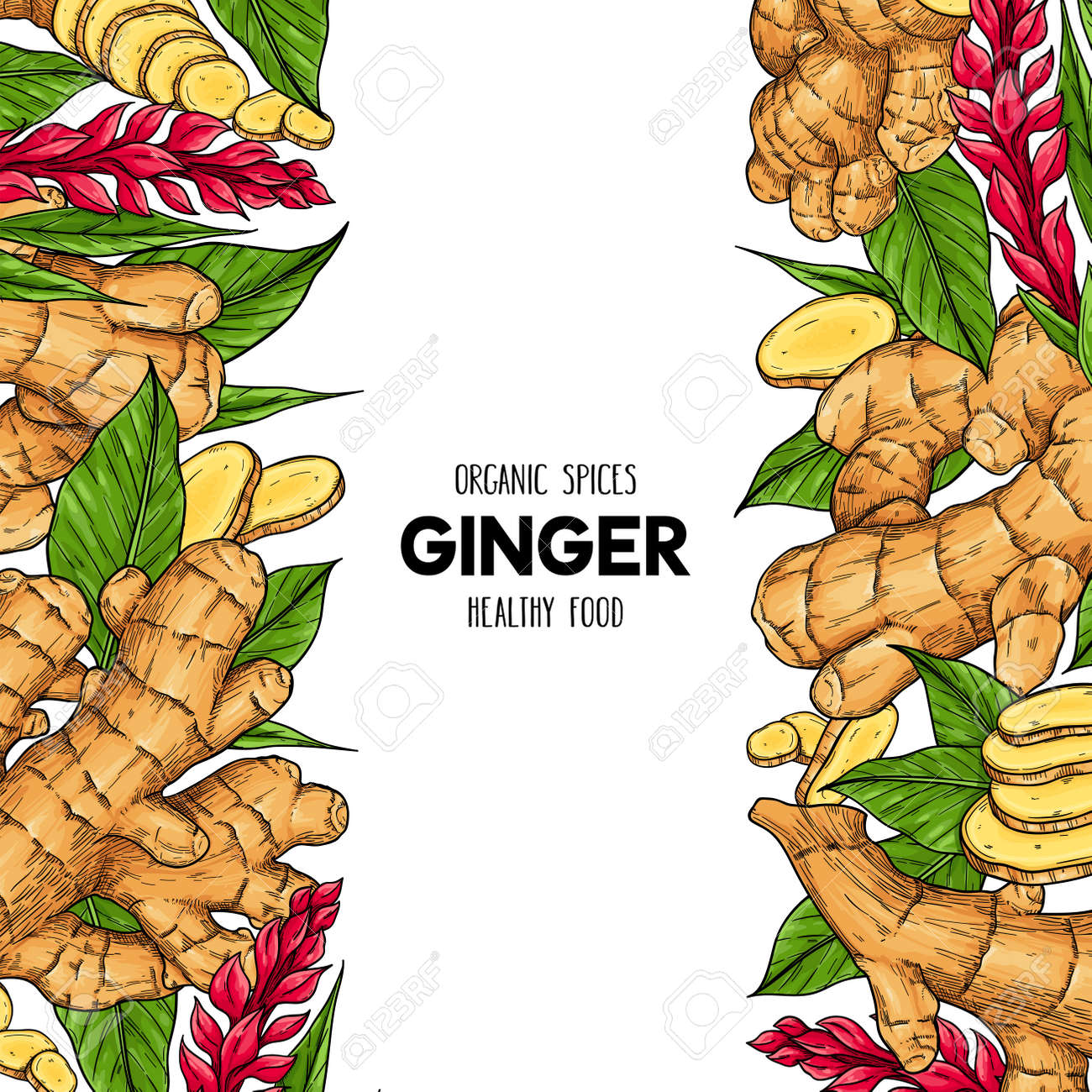 Vector hand drawn frame with organic ginger root, slices pieces, leaves and flower. Natural spices illustration - 156657825