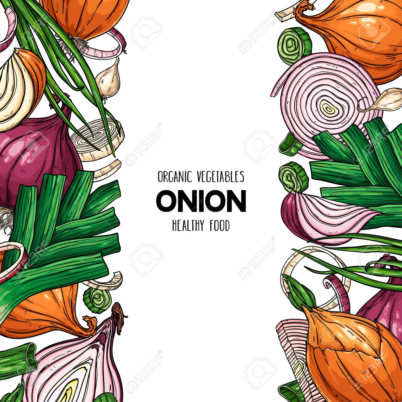 Vector hand drawn frame with onion bulb, slices, halves, pieces, green onion and leek. Organic vegetables illustration - 156657681