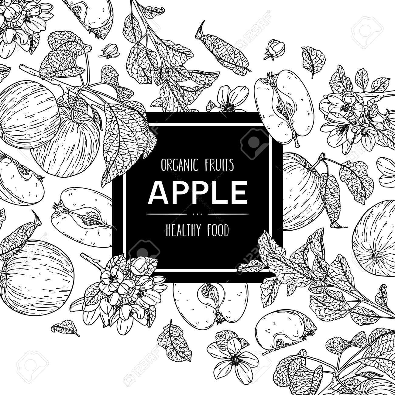 Vector hand drawn background with organic whole apple, half, flower, branch and leaves. Outline ink style illustration. - 168597261