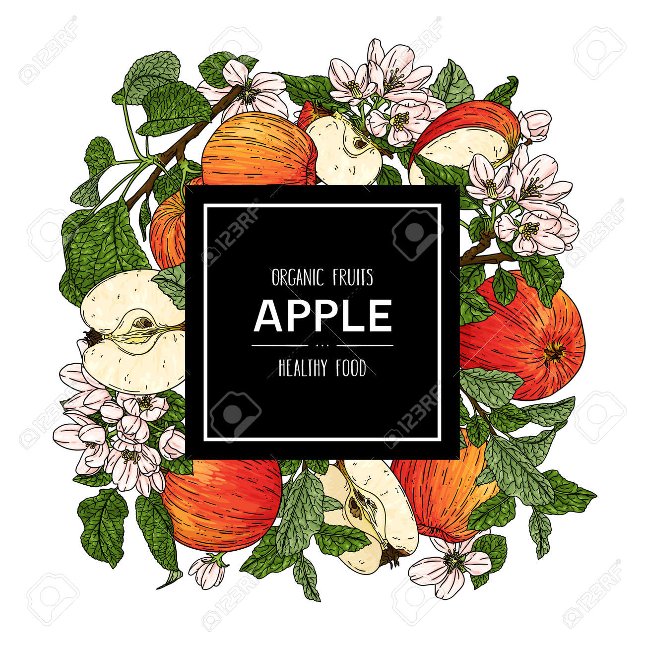Vector hand drawn background with organic whole apple, half, flower, branch and leaves. Organic fruits healthy illustration - 168597277