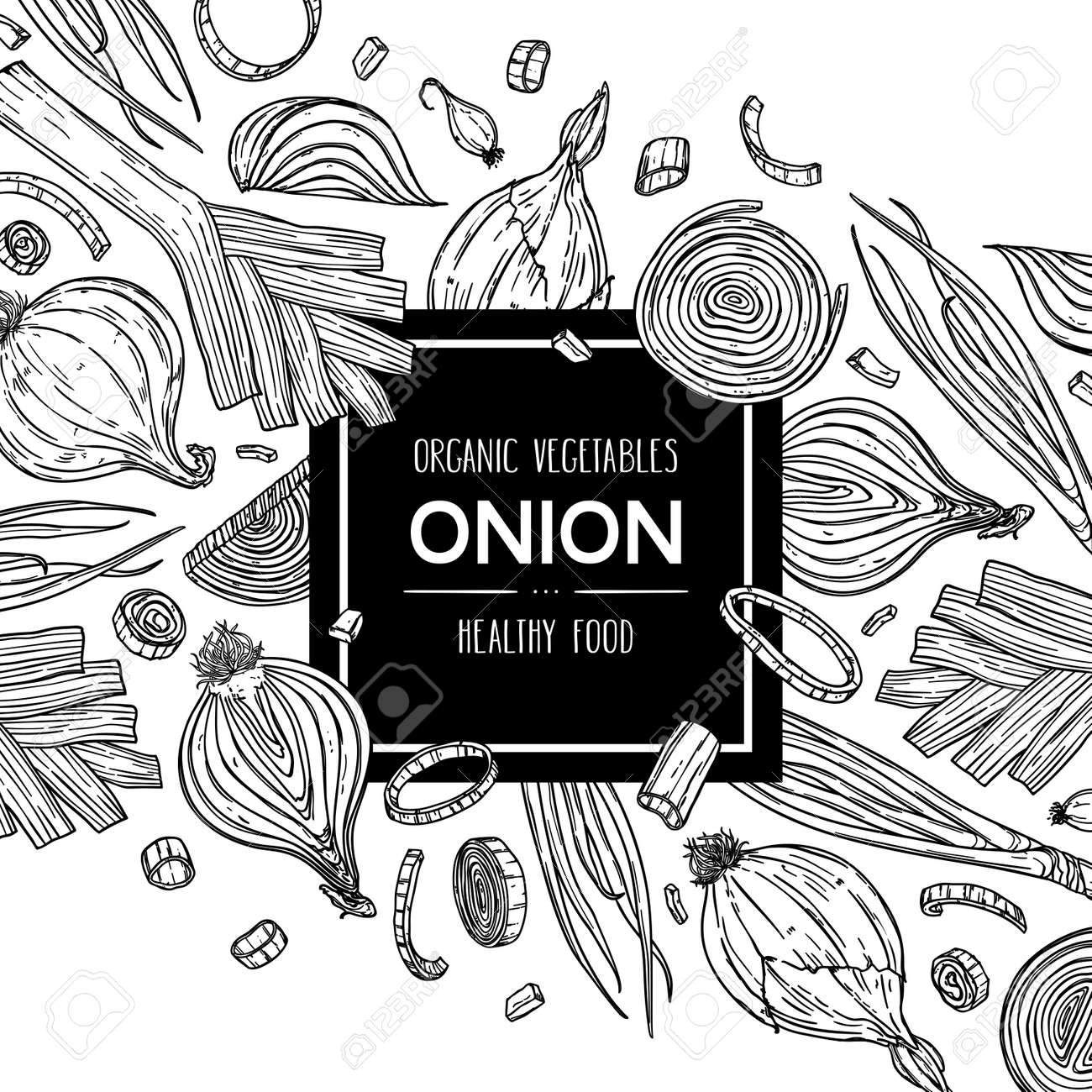 Vector hand drawn background with natural onion bulb, slices, halves, pieces, green onion and leek. Outline ink style illustration. - 168597348