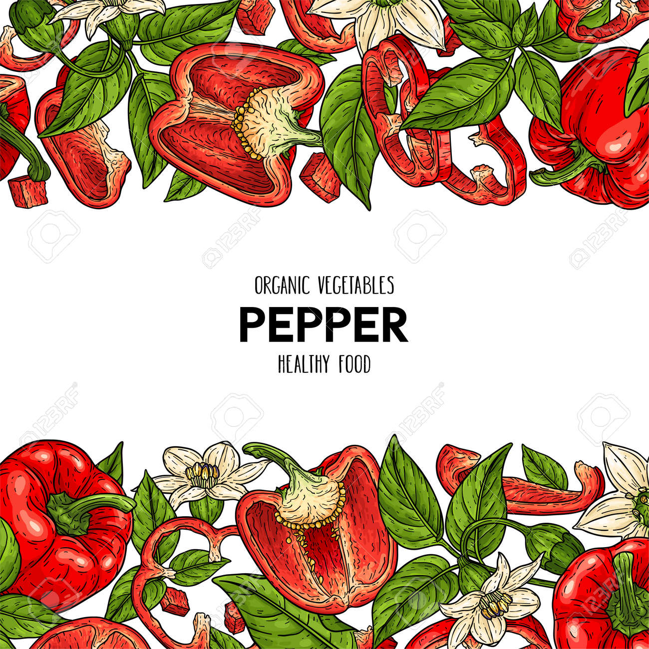 Vector hand drawn frame with bell peppers, slices, halves, pieces, flower, branch and leaves. Organic vegetables illustration - 168597398