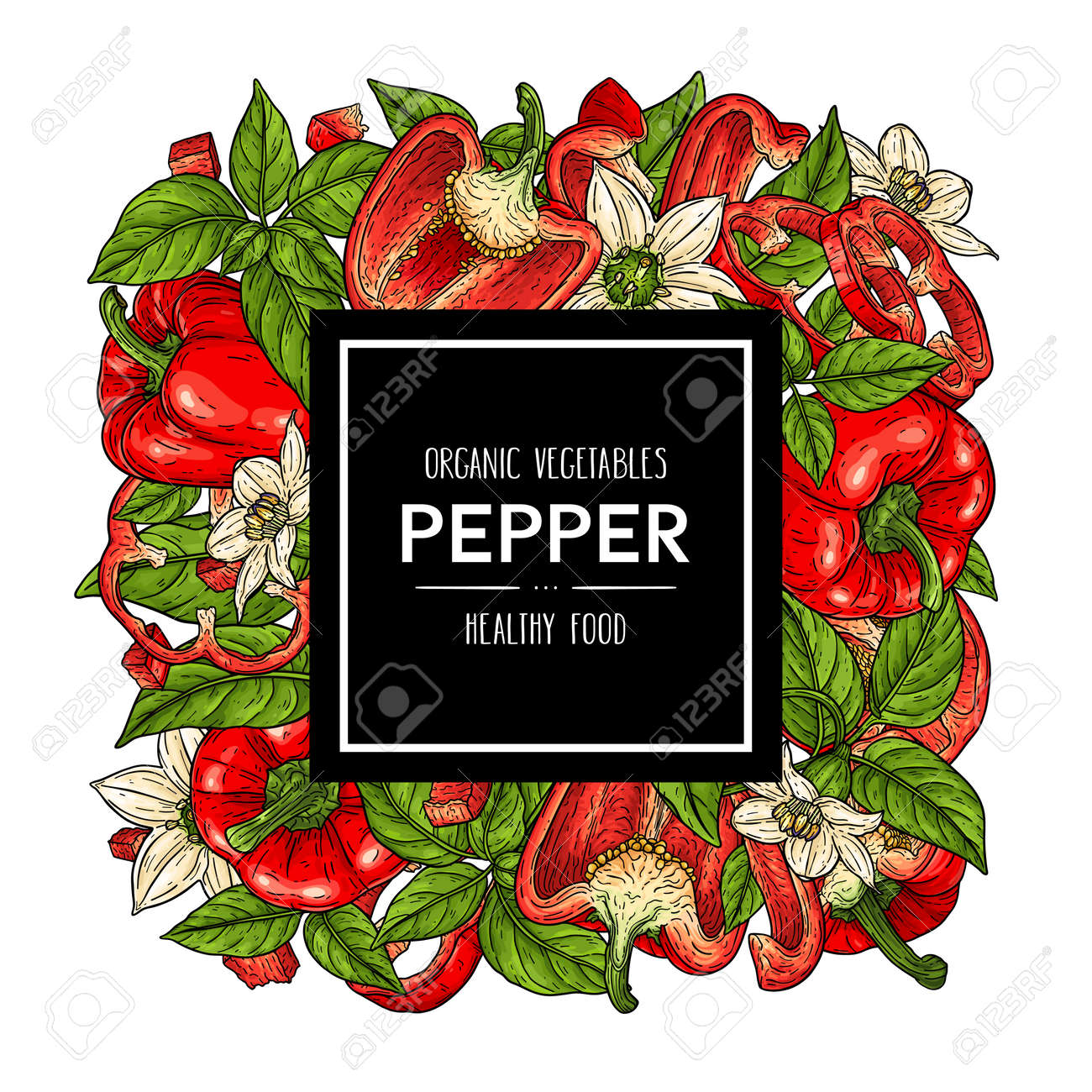 Vector hand drawn background with natural bell peppers, slices, halves, pieces, flower, branch and leaves. Healthy vegetables illustration - 168597422