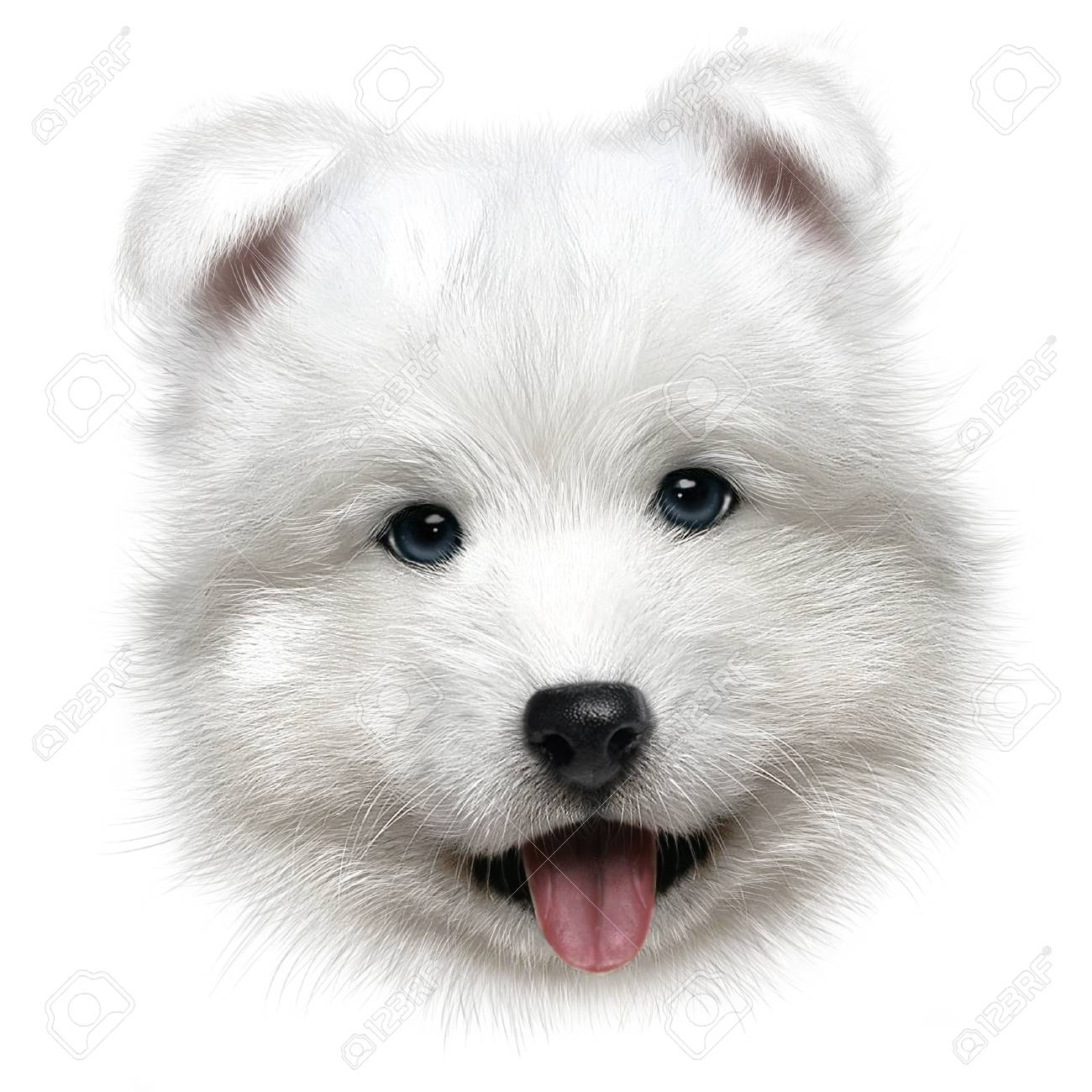 Hand Drawing Portrait Of A Puppy Samoyed On White Background Stock