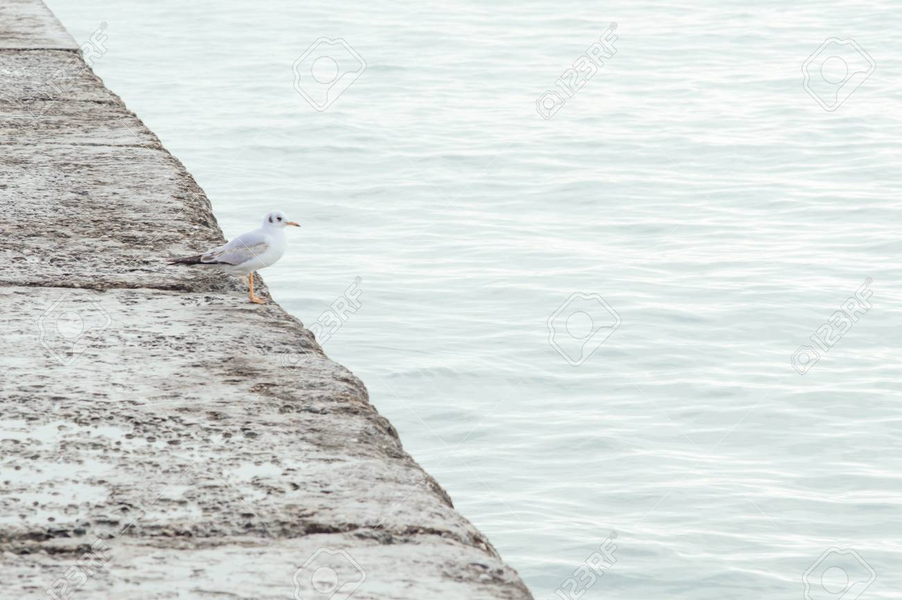 One seagull on the pier. Minimalistic colors. - 103505294