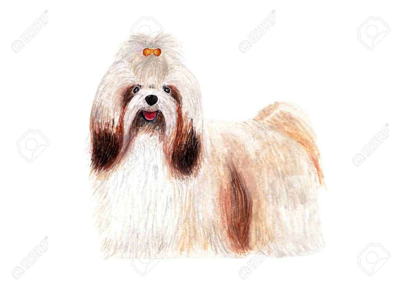 Shih Tzu With Long Hair Dog Grooming Care Watercolor Stock Photo