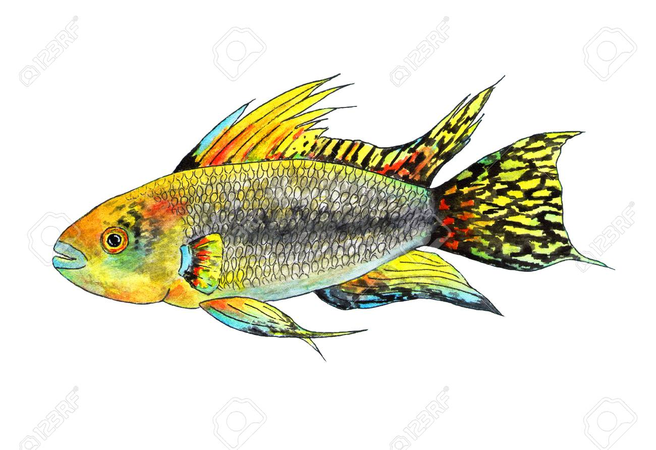 It Is A Tropical Fish Apistogramma Cockatoo Exotic In The Aquarium Watercolor For Fashion Print Poster Textiles Design