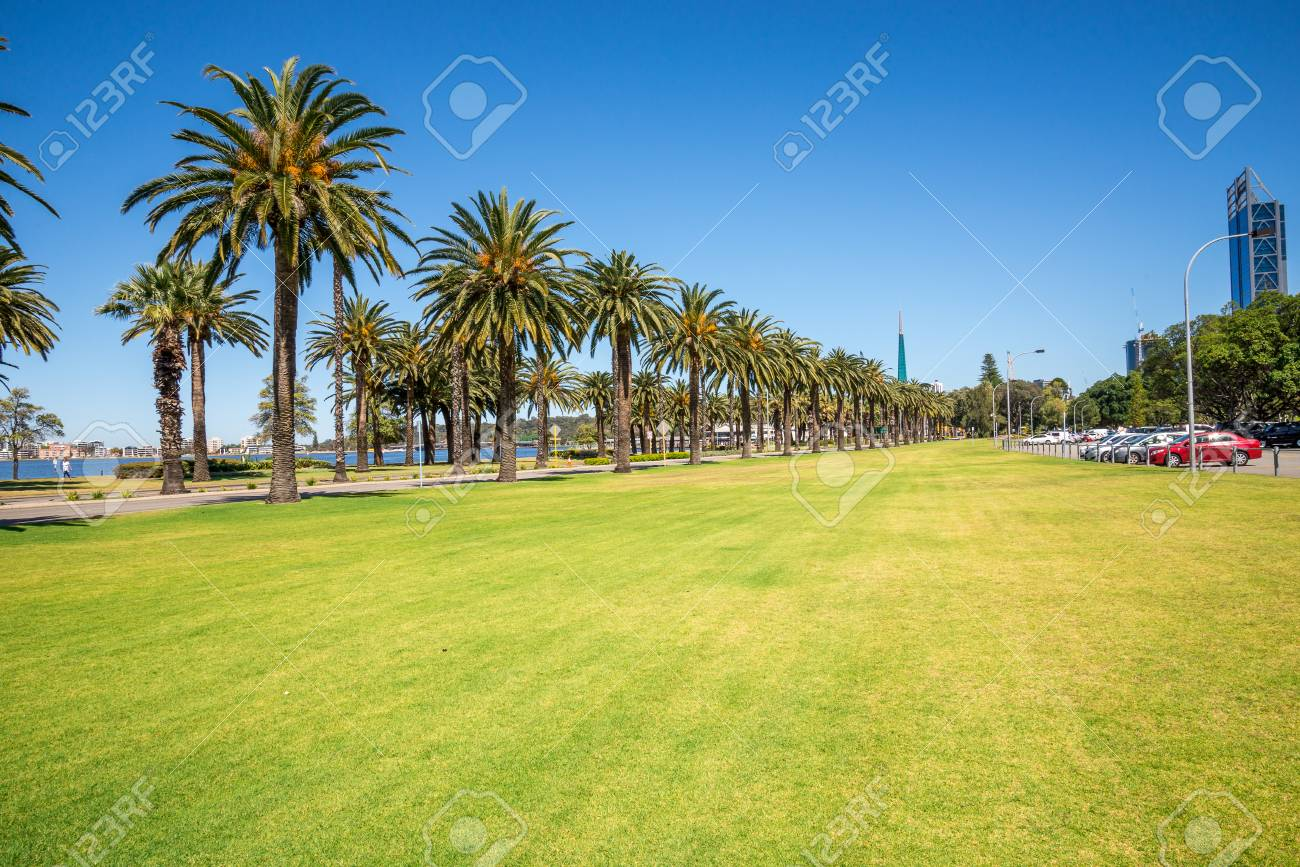 Palm trees in Langley Park along Riverside Drive and Swan River